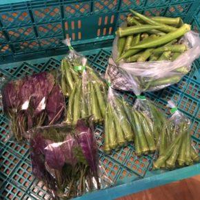 八重瀬町 島袋悟さんの自然栽培の丸オクラ、糸満市 金城聡さんの無農薬栽培のハンダマが入荷しました!
