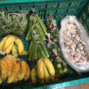 うるま市 玉城勉さんの自然栽培のにんにく、北中城村 ソルファコミュニティさん自然栽培の丸オクラ・よもぎ・小笠原バナナが入荷しました!