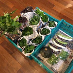 今帰仁村 片岡農園さんの無農薬栽培のかぼちゃ・なす・青しそ・赤しそ・モロヘイヤ・ツルムラサキ・空芯菜・おくらが入荷しました!