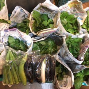 今帰仁村 片岡農園さんの無農薬栽培のナスビ・ウンチェバー・モロヘイヤ・ツルムラサキ・青しそ・オクラ・バジルが入荷しました!