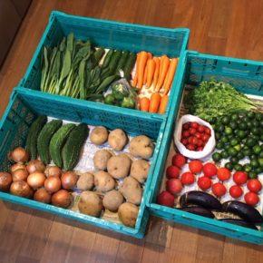 やんばるから森さんの無農薬野菜、ミニトマト・小玉トマト・じゃがいも・玉ねぎ・パクチー・小松菜・人参・四季柑・シークワーサー・茄子・ゴーヤー・パパイヤが入荷しました!