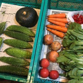 やんばるから森さんの無農薬野菜が入荷しました!