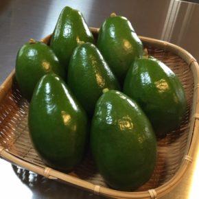 今が旬!本日のレキオでも紹介した、糸満市 金城さんの無農薬栽培の県産アボカドが再入荷しています。 肉厚で食感はとろりとしています。