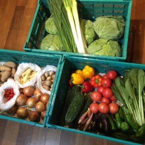 やんばるから森さんの無農薬栽培の野菜が入荷しました!今回はジャガイモ・玉ねぎ・ナス・ミニトマト・ゴーヤー・小松菜・トマト・きゃべつ・万能ねぎ・白ネギ・ヤングコーン・マッシュルーム・パプリカ・人参・ピーマン・茗荷です。