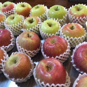 ご好評いただいている山口県産の減農薬栽培りんごが再入荷しました! 今回はフジとぐんま名月です。