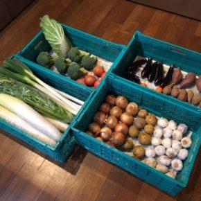 やんばるから森さんの無農薬野菜が入荷しました!本日はジャガイモ・白菜・ミニトマト・大玉トマト・人参・紅あずま・安納芋・ニンニク・玉ねぎ・白ネギ・セロリ・ブロッコリー・長岡茄子が入りました。