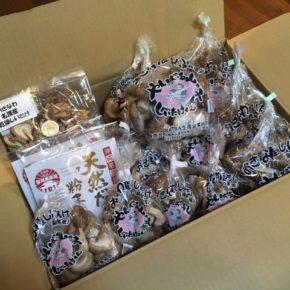 やんばる産おがくずで菌床栽培された生椎茸・乾燥キクラゲ・乾燥椎茸・粉末椎茸が入荷しました!