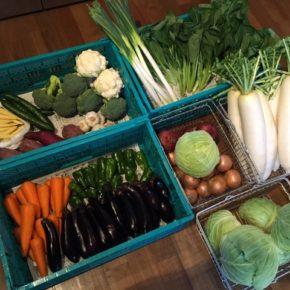 やんばるから森さんの無農薬野菜が入荷しました!本日は大根・白ネギ・キャベツ・玉ねぎ・赤玉ねぎ・小松菜・さつまいも・ブロッコリー・カリフラワー・人参・きゅうり・ピーマン・なす・ニンニクが入りました。