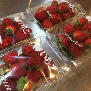 今シーズン初!国頭村 森岡いちご農園さんの無農薬・無肥料・露地栽培のいちごが入荷しました!