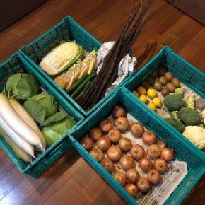 やんばるから森さんの無農薬野菜が入荷しました!本日は大根・キャベツ・ブロッコリーカリフラワー・ゴボウ・玉ねぎ・白菜・ヤングコーン・キュウリ・レモン・サルナシが入りました。