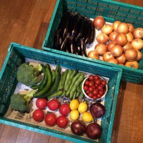 やんばるから森さんの無農薬野菜が入荷しました!本日はブロッコリー・玉ねぎ・白菜・キュウリ・ミニトマト・大玉トマト・そら豆・なす・赤玉ねぎ・レモンが入りました。