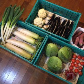 やんばるから森さんの無農薬野菜が入荷しました!本日は白ネギ・大根・さつまいも・きゃべつ・リコエラトマト・ミニトマト・なす・カリフラワー・ニンニクが入りました。