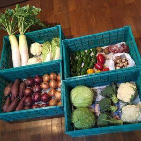 やんばるから森さんの無農薬野菜が入荷しました!本日はブロッコリー・カリフラワー・キャベツ・白菜・玉ねぎ・赤玉ねぎ・サツマイモ・大根・ピーマン・パプリカ・ミニトマト・マッシュルーム・サルナシが入りました。