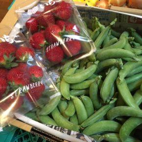国頭村 森岡いちご農園さんの無農薬・無肥料・露地栽培のイチゴとスナップエンドウが入荷しました!