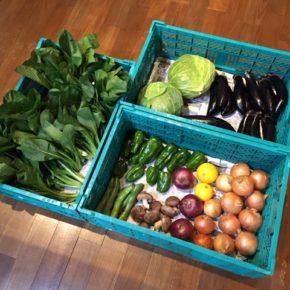 やんばるから森さんの無農薬野菜が入荷しました!本日は枝豆・そら豆・なす・マッシュルーム・キャベツ・小松菜・ピーマン・椎茸・赤玉ねぎ・玉ねぎ・ニューサマーが入りました。