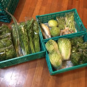 今帰仁村 片岡農園さんの無農薬野菜が入荷しました!キャベツ・白菜・大根・生姜・春菊・スナップエンドウ・インゲン・セロリ・ほうれん草・ネギが入荷です。