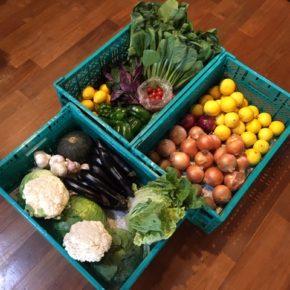 やんばるから森さんの無農薬野菜が入荷しました!本日は小松菜・白菜・カリフラワー・キャベツ・なす・ピーマン・ハンダマ・ごぼう・ゴーヤー・ミニトマト・にんにく・赤玉ねぎ・玉ねぎ・ニューサマー・サルナシ・レモン・栗カボチャが入りました。