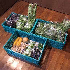 今帰仁村 片岡農園さんの無農薬野菜が入荷しました!本日はオクラ・赤しそ・青じそ・生姜・なす・ピーマン・モロヘイヤ・ツルムラサキ・モーウィ・空芯菜・栗かぼちゃが入荷しました。 http://hallab.pecori.jp