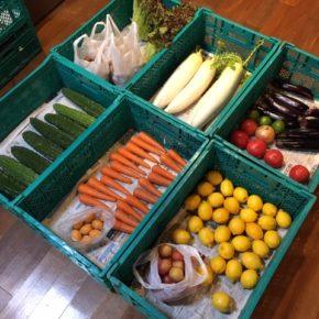 やんばるから森さんの無農薬野菜が入荷しました。本日はサニーレタス・大玉トマト・ゴーヤー・大根・クリームなす・人参・玉ねぎ・マッシュルーム・レモン・びわ・大石プラムが入りました。