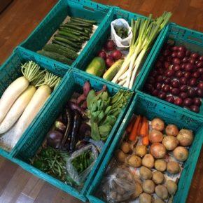 やんばるから森さんの無農薬野菜が入荷しました。本日はアスパラガス・遠州オクラ・大根・小玉じゃがいも・じゃがいも・ピーマン・きゅうり・ゴーヤー・インゲン・玉ねぎ・赤玉ねぎ・スウィートコーン・万願寺とうがらし・青梗菜・白ネギ・庄屋長茄子・枕茄子・人参・冬瓜・さつまいも・パッションフルーツが入りました。