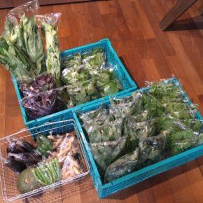 今帰仁村 片岡農園さんの無農薬野菜が入荷しました!本日は赤しそ・青じそ・オクラ・生姜・なす・ピーマン・モロヘイヤ・ツルムラサキ・空芯菜・栗かぼちゃが入荷しました。