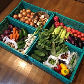 やんばるから森さんの無農薬野菜がたくさん入荷しました。本日はキュウリ・人参・玉ねぎ・赤玉ねぎ・アボカド・トマト・とうもろこし・マッシュルーム・椎茸・枝豆・大葉・アスパラ・茗荷・白ネギ・パプリカ・青梗菜・ゴーヤー・ヘチマ・なす・にんにく・ライム・プラム・ドラゴンフルーツが入荷しました。