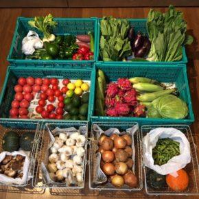 やんばるから森さんの無農薬野菜が入荷しました。本日は小松菜・青梗菜・キャベツ・人参・玉ねぎ・アボカド(二年)・アボカド(摘果)・かぶ・ズッキーニ・トマト・とうもろこし・マッシュルーム・椎茸・枝豆・茗荷・パプリカ・ピーマン・万願寺唐辛子・ゴーヤー・ヘチマ・なす・オクラ・栗かぼちゃ・コリンキー・サラダ南瓜・さつまいも・にんにく・ライム・レモン・ドラゴンフルーツが入荷しました。