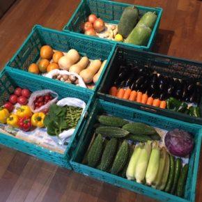 やんばるから森さんの無農薬野菜が入荷しました。本日は人参・玉ねぎ・トマト・ミニトマト・大葉・とうもろこし・枝豆・パプリカ・ピーマン・ゴーヤー・きゅうり・紫キャベツ・なす・生姜・マッシュルーム・冬瓜・バターナッツカボチャ・レモン・マンゴーが入荷しました。