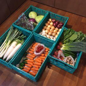 やんばるから森さんの無農薬野菜が入荷しました。本日はキャベツ・紫キャベツ・レタス・きゅうり・大根・白ネギ・万能ねぎ・小松菜・マッシュルーム・大玉トマト・ミニトマト・玉ねぎ・赤玉ねぎ・人参・ニンニク・ピーマン・里芋が入荷しました。