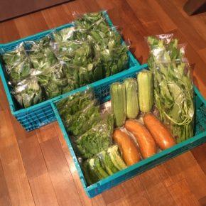 今帰仁村 片岡農園さんの無農薬栽培野菜、小松菜・青しそ・モロヘイヤ・ツルムラサキ・サラダヘチマ・モーウィ・空芯菜・四角豆が入荷しました!