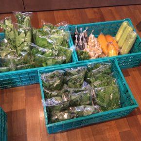 今帰仁村 片岡農園さんの無農薬野菜が入荷しました!本日は今シーズン初の小松菜やサラダヘチマ・青じそ・生姜・なす・モロヘイヤ・ツルムラサキ・空芯菜・モーウィ・ピーマンが入荷しました。