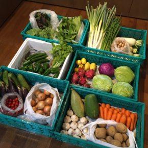台風10号の影響に備え、名護市 ベアーズネイチャーファーム 森さんの無農薬野菜を仕入れてきました。 本日も多めの収穫をしていただき、キャベツ・ロメインレタス・青梗菜・大根・白ネギ・ニラ・ハンダマ・玉ねぎ・人参・ジャガイモ・ヘチマ・きゅうり・パパイヤ・ミニトマト・ピーマン・すくな南瓜・マッシュルーム・ニンニク・なす・レモン・台湾レモン・ドラゴンフルーツが入荷しました。