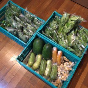 今帰仁村 片岡農園さんの無農薬野菜が入荷しました!本日は小松菜・サラダヘチマ・青じそ・モロヘイヤ・なす・ツルムラサキ・空芯菜・生姜・モーウィ・ピーマンが入荷しました。