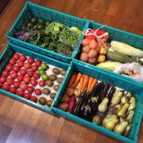 やんばるから森さんの無農薬野菜が入荷しました。久しぶりにサルナシ(在来キウイ)も入荷です。キャベツ・パプリカ・万能ねぎ・小松菜・青梗菜・アボカド・きゅうり・レタス・マッシュルーム・中玉トマト・ミニトマト・玉ねぎ・人参・なす・米なす・じゃがいも・さつまいも・すくなかぼちゃ・マイヤーレモン・サルナシが入荷しました。