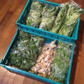 今帰仁村 片岡農園さんの無農薬野菜が入荷しました!本日は青じそ・モロヘイヤ・ツルムラサキ・空芯菜・生姜が入荷しました。