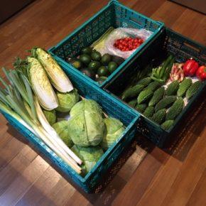 やんばるから森さんの無農薬野菜が入荷しました。今シーズン初のゴボウ・ジャガイモも出始めました。キャベツ・白菜・白ネギ・パプリカ・ゴーヤー・小松菜・青梗菜・アボカド・きゅうり・茗荷・マッシュルーム・中玉トマト・ミニトマト・アスパラ・オクラ・玉ねぎ・人参・なす・じゃがいも・ごぼう・栗かぼちゃ・サルナシ(在来キウイ)が入荷しました。