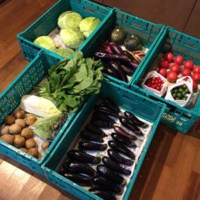やんばるから森さんの無農薬野菜、キャベツ・レタス・白菜・小松菜・茗荷・トマト・ミニトマト・なす・じゃがいも・さつまいも・栗かぼちゃ・シークワーサーが入荷しました。