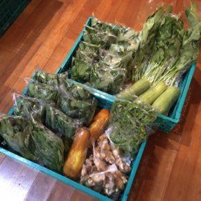 今帰仁村 片岡農園さんの無農薬栽培、小松菜・青しそ・モロヘイヤ・ツルムラサキ・サラダヘチマ・モーウィ・空芯菜・生姜が入荷しました!