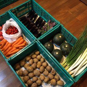 やんばるから森さんの無農薬野菜、本日一便目は白ネギ・万能ねぎ・ハンダマ・人参・トマト・ミニトマト・なす・じゃがいも・栗かぼちゃが入荷しました。