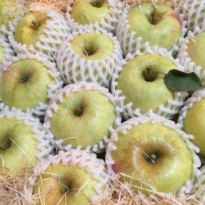 山口県からもぎたての低農薬りんごが再入荷しました!今回も甘味と食感の良い「ふじ」と「ぐんま名月」です。