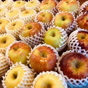 山口県からもぎたての低農薬りんごが再入荷しました!今回は「シナノゴールド」「秋映」「シナノイースト」。どれも味が乗っていて美味しいですよ。
