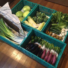 やんばるから森さんの無農薬野菜、キャベツ・ブロッコリー・白菜・きゅうり・セロリ・白ネギ・ピーマン・青梗菜・なす・オクラ・サツマイモ・ごぼう・にんにく・サルナシ・柿・プラムドプラムが入荷しました!