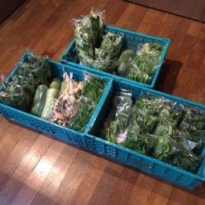 今帰仁村 片岡農園さんの無農薬栽培野菜、リーフレタス・ルッコラ・小松菜・青しそ・モロヘイヤ・ツルムラサキ・オクラ・サラダヘチマ・モーウィ・空芯菜・四角豆・冬瓜が入荷しました!