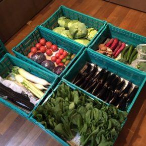 やんばるから森さんの無農薬野菜、キャベツ・紫キャベツ・キュウリ・ブロッコリー・大根・セロリ・青梗菜・小松菜・大玉トマト・中玉トマト・なす・椎茸・サツマイモ・ごぼう・レモン・ライムが入荷しました!