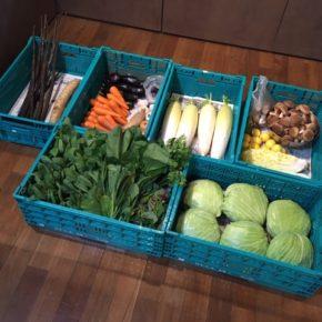 やんばるから森さんの無農薬野菜、キャベツ・大根・パクチー・アマランサス・白菜・青梗菜・小松菜・マッシュルーム・オクラ・玉ねぎ・ジャガイモ・ニンニク・・なす・椎茸・長芋・ごぼう・プラム・レモン・ライムが入荷しました。