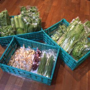 今帰仁村 片岡農園さんの無農薬野菜が入荷しました!本日はリーフレタス・小松菜・ルッコラ・うりずん豆・ツルムラサキ・サラダヘチマ・小かぶ・冬瓜が入荷しました。 ほか北中城村 ソルファコミュニティさんの自然栽培の小ねぎ・ニラ・ローゼル、うるま市 玉城勉さんの自然栽培の新生姜・丸オクラも入荷しました。