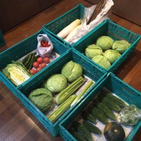 やんばるから森さんの無農薬野菜、白菜・キャベツ・大根・キュウリ・ゴーヤー・ミニトマト・トマト・セロリ・ゴボウ・栗かぼちゃが入荷しました。