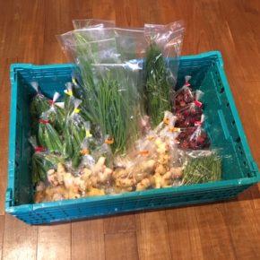 北中城村 ソルファコミュニティさんの自然栽培の小ねぎ・ニラ・ローゼル・角オクラ・ローズマリー、うるま市 玉城勉さんの自然栽培の新生姜・丸オクラが入荷しました。