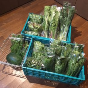 今帰仁村 片岡農園さんの無農薬野菜が入荷しました!本日はリーフレタス・小松菜・オクラ・うりずん豆・ツルムラサキ・人参葉・小かぶ・冬瓜が入荷しました。