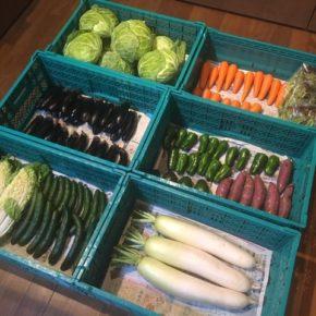 やんばるから森さんの無農薬野菜、キャベツ・サニーレタス・きゅうり・大根・白菜・なす・人参・ピーマン・アボカド・さつまいもが入荷しました。